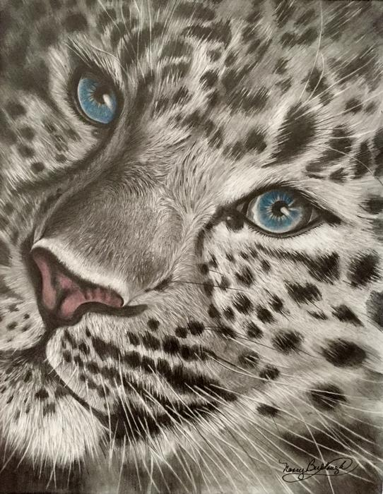 Eyes of the Snow Leopard